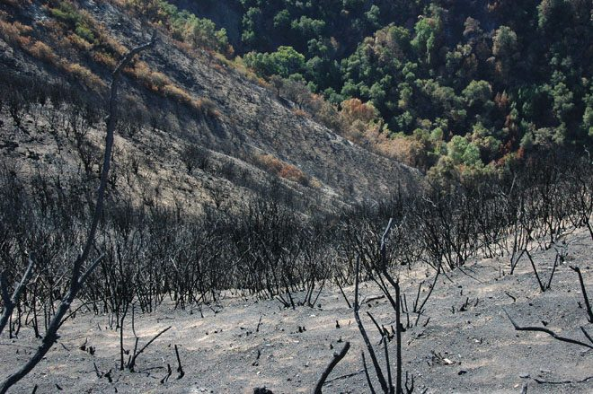 The devastated landscape on Hennicksons Ridge after the 2008 Basin Complex fire. Photo: Bill Davidow
