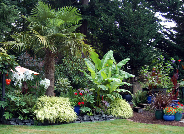 The garden's windmill palm (Trachycarpus fortunei) has grown to a commanding height of more than 20 feet tall. Photo: Deb Caulderon