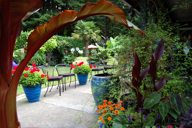 "An expansive patio furnished with seating set among cobalt containers filled with seasonal annuals and an impressive Abyssinian red banana (Ensete ventricosum 'Maurelii') invite visitors to the garden to slow down and savor Judy's ""tropical paradise."" Photo: Deb Caulderon"