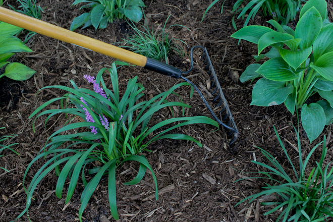 Use a coarse organic mulch to suppress weeds, retain moisture, and maintain soil organic matter. Photo: Katie Elzer-Peters