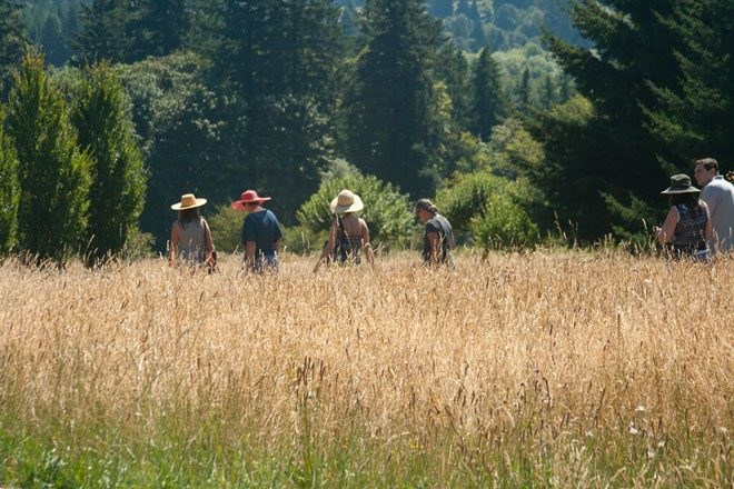 Enchanted garden bloggers from throughout the country stroll through the meadow at Westwind Farm Studio. Photo: Scott Weber