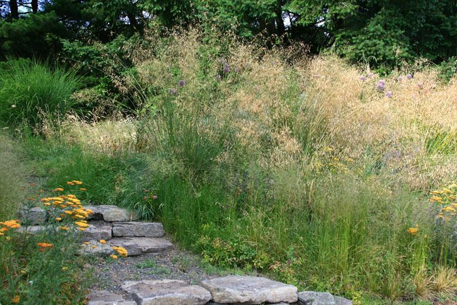 Plantings of ornamental grasses wave in the wind and create continuity between perennial gardens and the surrounding meadow. Photo: Kelly Kilpatrick