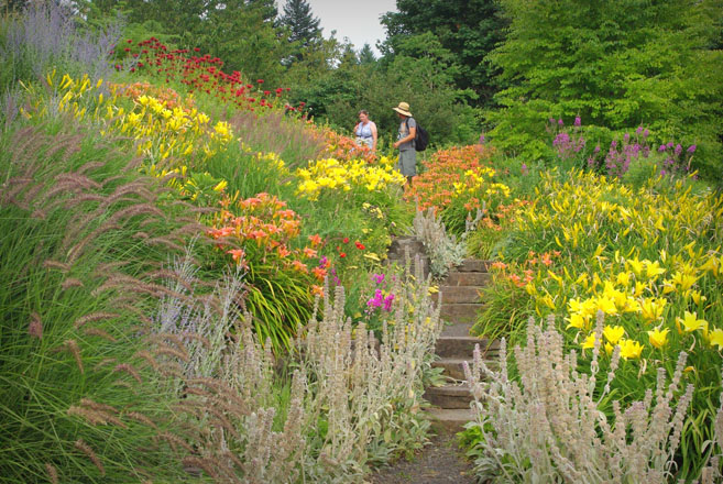 Garden bloggers stroll through banks of colorful perennials lively with birds and pollinators. Photo: Allan Lorence