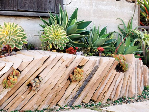 Succulents thrive between vertically stacked flagstones that create a low wall designed by Andrea Hurd. Larger succulents filling in the space atop the wall include yellow and white rosettes of Aeonium 'Sunburst', and variegated agave.  Photo: Linda Lamb Peters