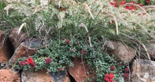 CA-garden-feature