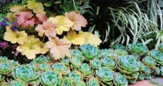Succulents-feature