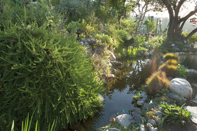 A view of the Gottlieb garden with fish pond. Photo: Susan Gottlieb