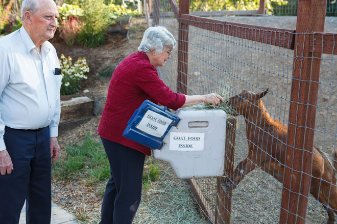 Residents of Healdsburg Senior Living Center feeding  frisky goats. Photo: Saxon Holt