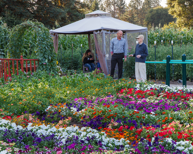 Annual beds blaze with petunias, marigolds, zinnias, and other colorful seasonal blooms. Photo: Saxon Holt