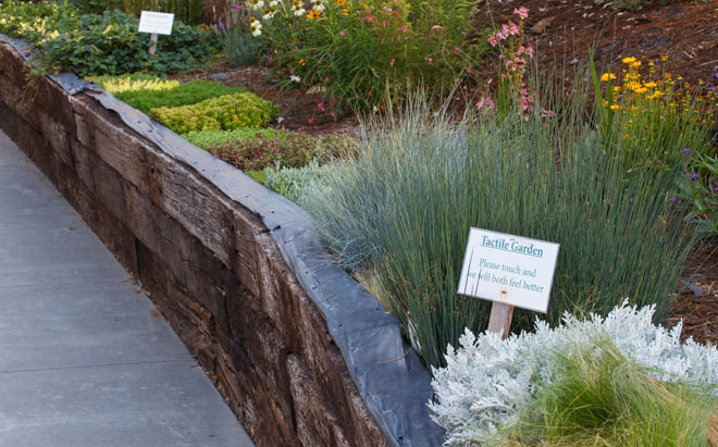 A raised bed allows easy access to a variety of plants in the therapeutic tactile garden. Photo: Saxon Holt