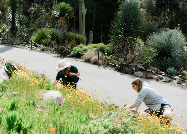 Meghan Ray (left) and author Clare Al-Witri work side by side amidst the annual spring display in the 