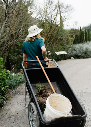 Meghan cleans up and rolls her wheelbarrow back down the hill at the UC Botanical Garden at Berkeley. Photo: Ryan Tuttle