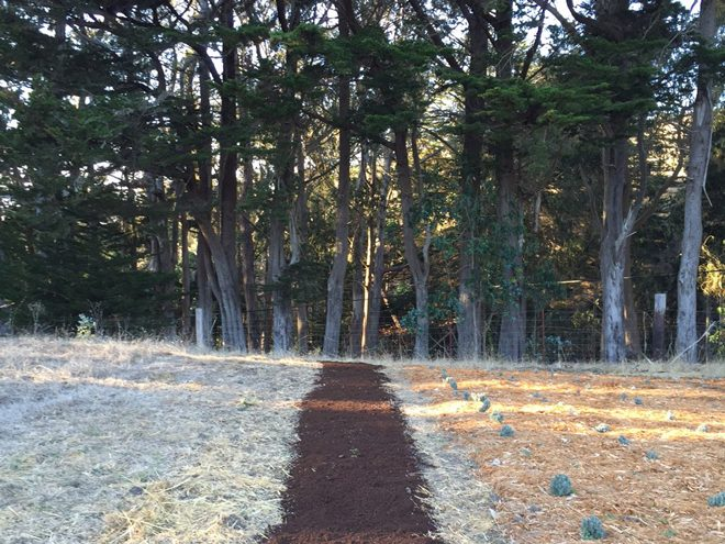The field was thoroughly prepared prior to planting the saffron corms in late September. Photo: Jennifer Lee Segale