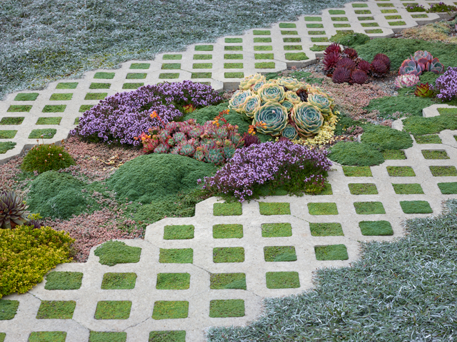 Different varieties of creeping thyme form a dense mat, highlighted with sempervivums, Echeveria derosa (left) and Echeveria elegans (center). Photo: Marion Brenner