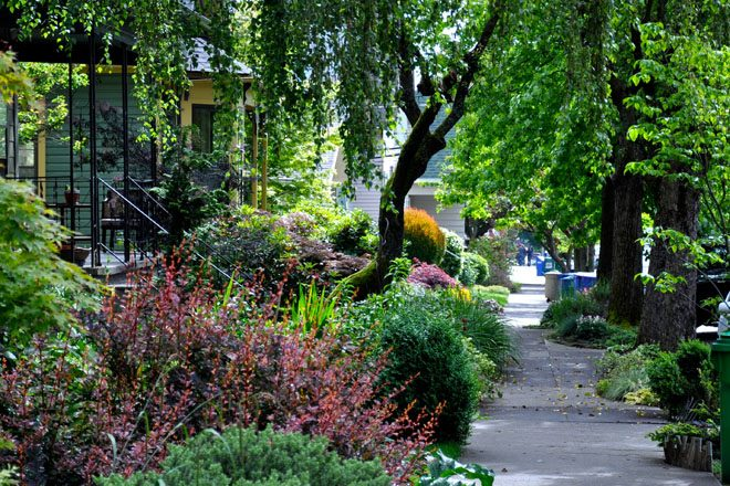 City gardeners play a vital role in strengthening urban forests. Photo: K. Kendall via Flickr