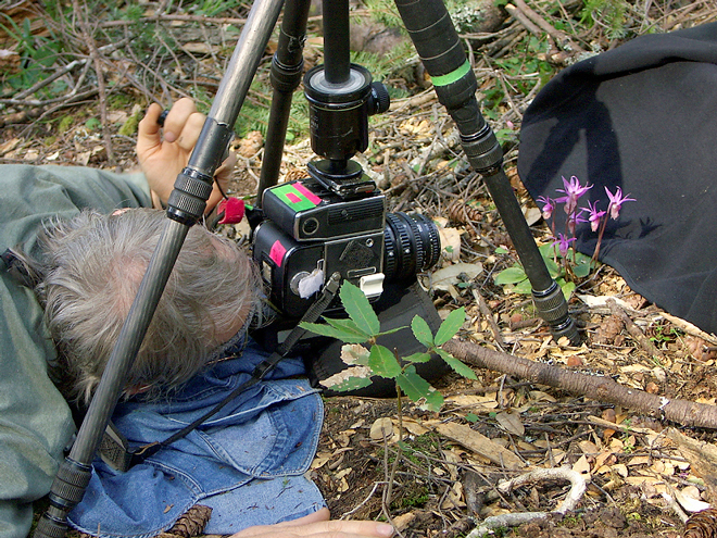 Rob Badger's set up for shooting a natural light wildflower portrait of a fairy slipper orchid (Calypso bulbosa) in 