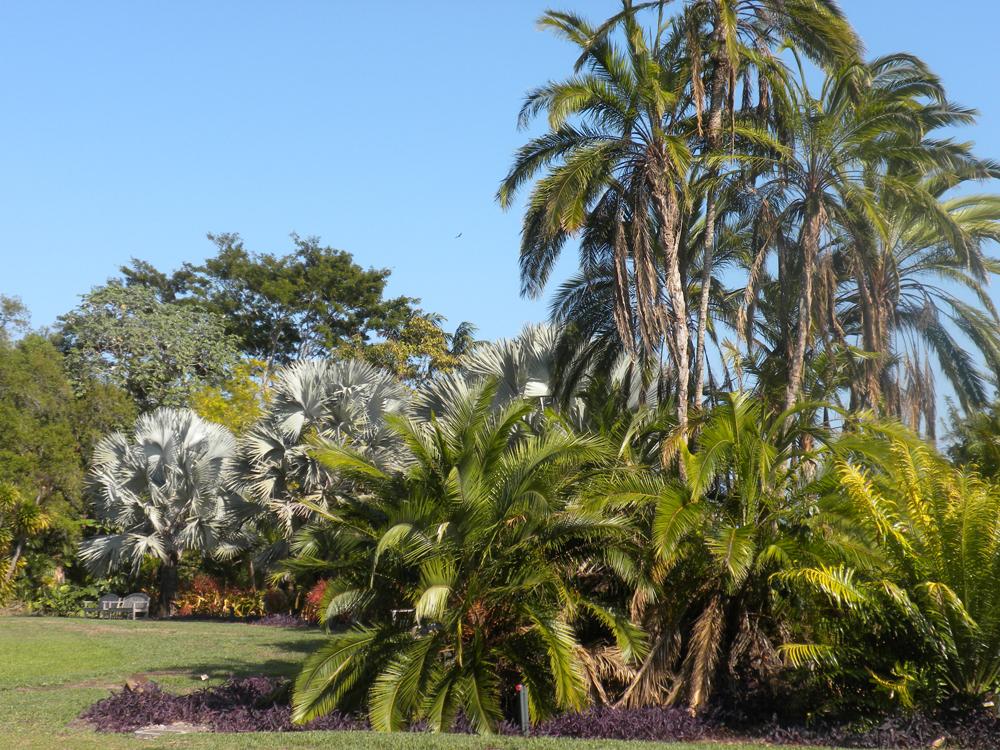 Fairchild Garden. Photo: Sandy Schmidt
