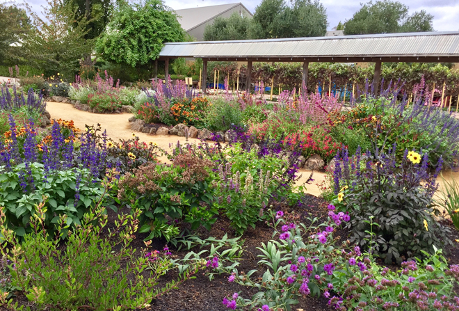 The colorful and lively pollinator-friendly plantings at Cornerstone Gardens. Photo: Kate Frey