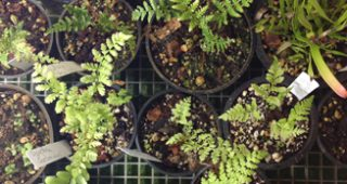 tree-fern-feature