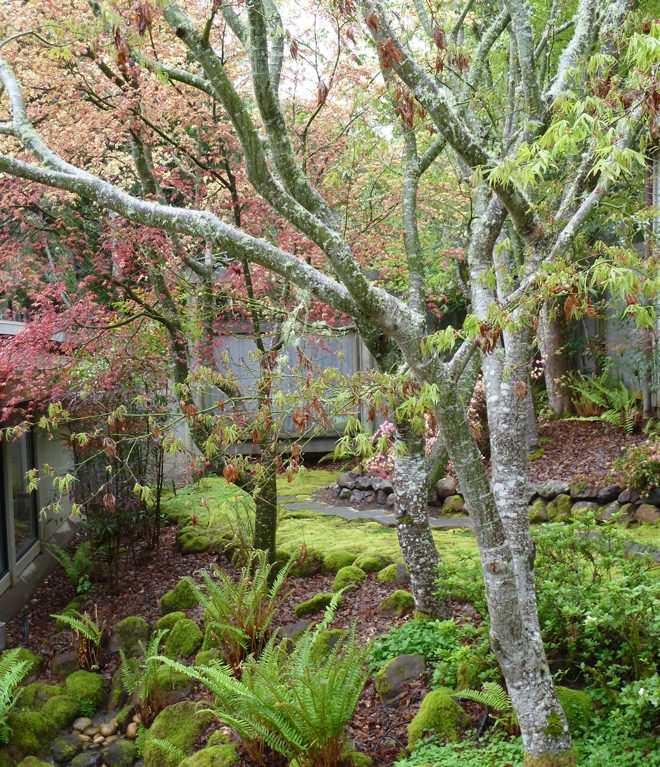 Spring in the author's serene, Japanese-inspired Point Reyes garden. Photo: Julie Monson