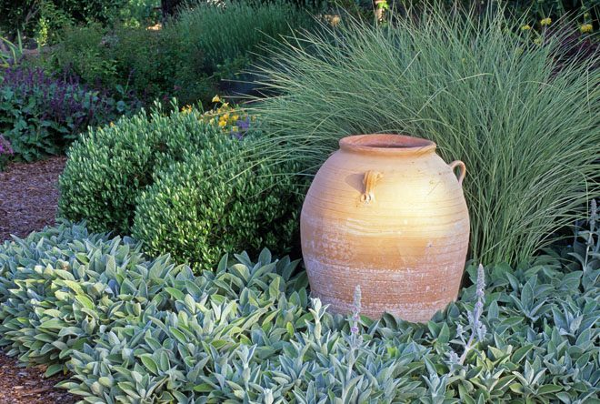 In this handsome summer-dry garden a garden urn is backed by Miscanthus sinensis 'Morning Light' and mounds of Olea europaea 'Little Ollie' above a silvery carpet of Stachys byzantina 'Big Ears'. Photo: Saxon Holt/PhotoBotanic