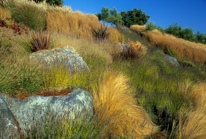 A tawny California hillside in late summer with ornamental grasses and boulders. Photo: Saxon Holt/PhotoBotanic