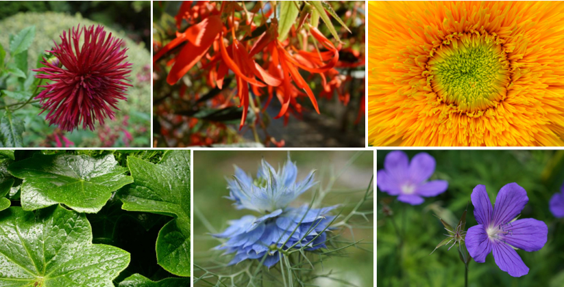 "Plants featured in our color series, ""Over and Under the Rainbow."" Photos: Daniel Mount"