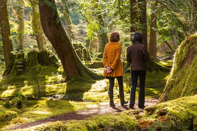 Footpaths and trails through the Moss Garden allow visitors to immerse themselves in natural beauty. Photo: courtesy of Bloedel Reserve