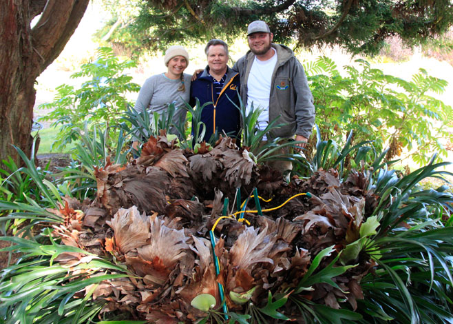 John Ziesenhenne (center) together with Jaime Jensen (left), lead gardener at MCBG, and Peter Baker (right) gardener at MCBG, pose with the fern before the botanical giant was installed. Photo: Roxanne Perkins