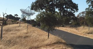 stanford dish and trees